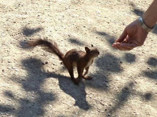 016Squirrel