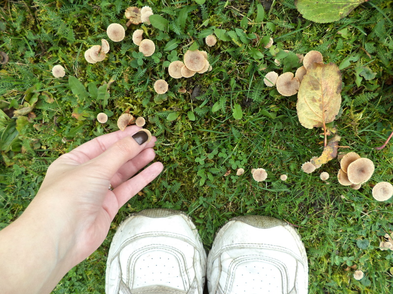 156MushroomFeet