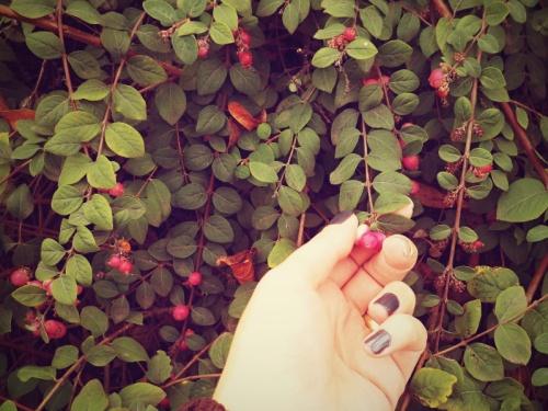210PinkBerries