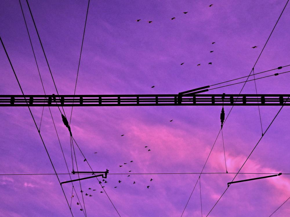 264angrybirds