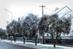 design-winter (1)