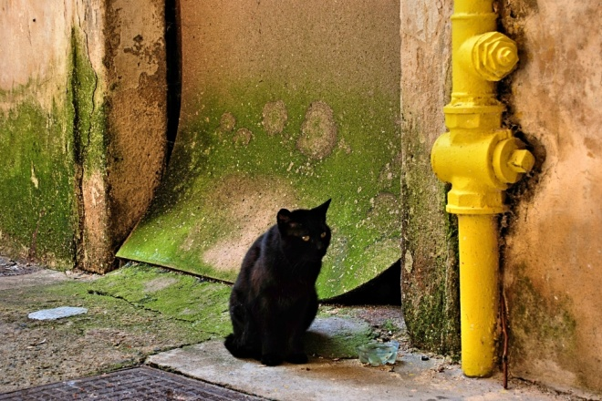 2014-05-31-prague-black-cat