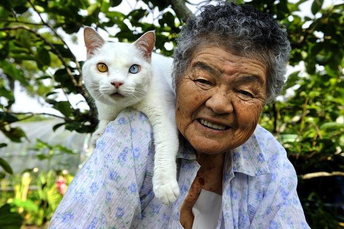 japanese-granny-cat