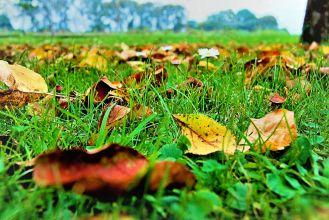 Daisy among Leaves