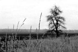 Bleak Landscape