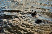 Stony Waters