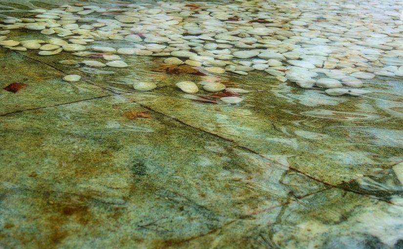 Poetry 101 Rehab:Rain