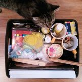 Art supply box, plus an artsy cat