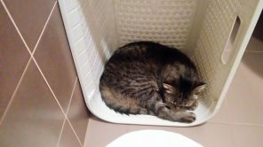 Clean laundry basket, aka cat bed