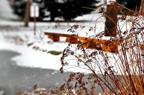 changing-seasons-01 (6)