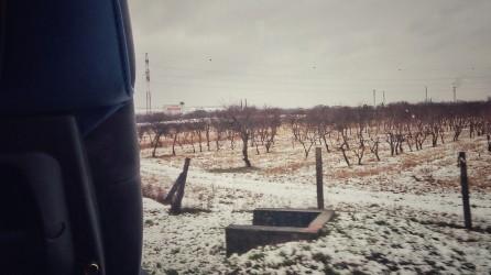 Barren fields
