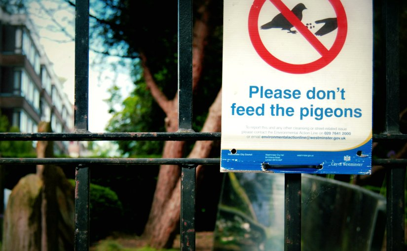 What I Hated the Least Today 118/365: YouTube, Scorpions andPigeons