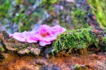Delightfully dead blossom