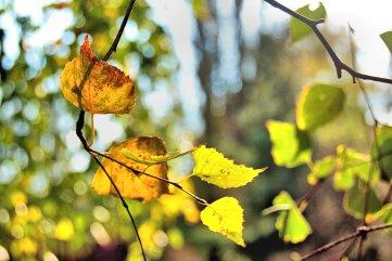 changing-seasons-10-8