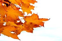 changing-seasons-11-7