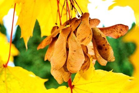 changing-seasons-11-8