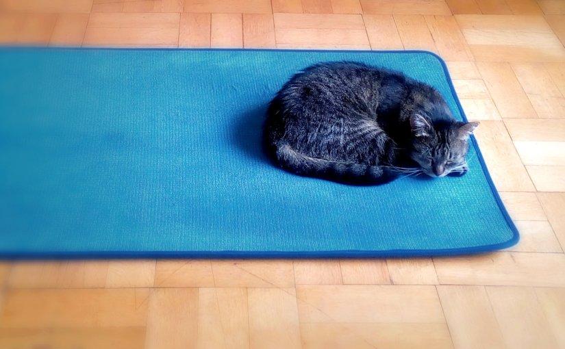 Caturday Yoga