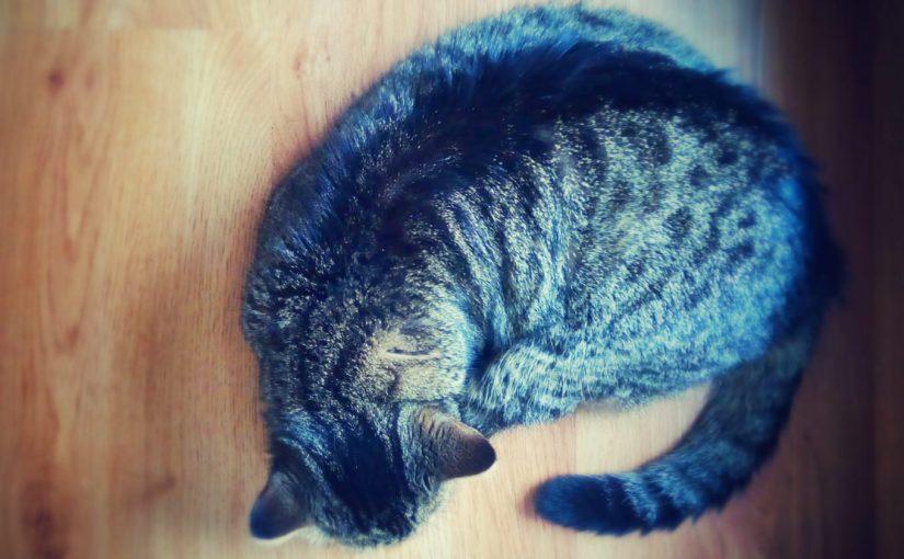 Caturday Cat