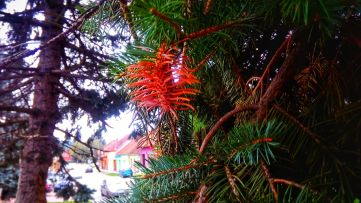 A see-through tree