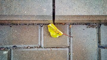 Did someone lose a leaf?