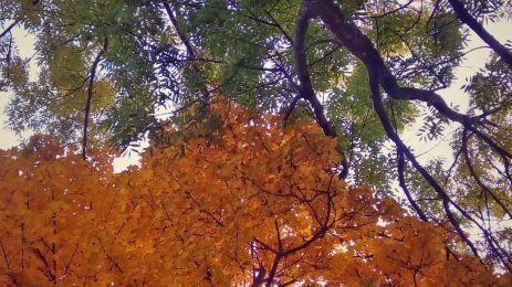 Tree crowns kissing