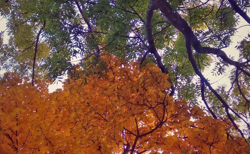 Super Colourful Autumnscapes
