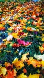 Glam leaves