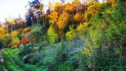 Tree and shrub assortment