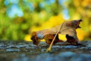 changing-seaasons-october17 (2)