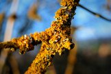 Is it lichen? Does it eat trees?