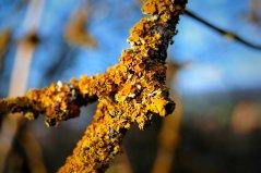 Is it lichen? Does it eat trees?