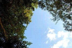 The sky is blue. Duh.