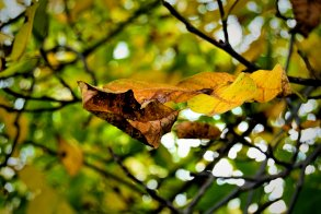 Classic autumn