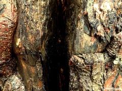 WoodenAbyss