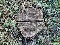 WoodenHalves