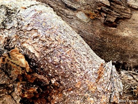 WoodenLimbs