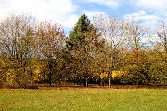 18-10-autumn (1)