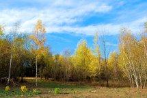 18-10-autumn (3)