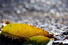 18-10-autumn (4)