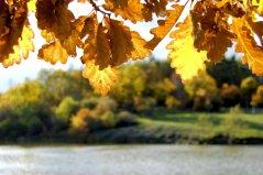 18-10-autumn (5)